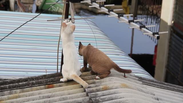 猫がアンテナが待っています。 - 2匹点の映像素材/bロール