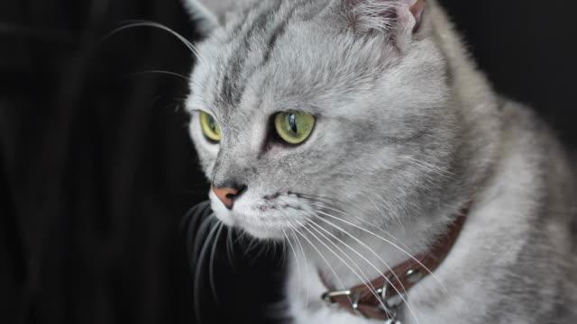 猫 - ふわふわ点の映像素材/bロール