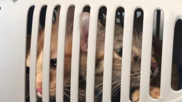 kediler - kafes sınırlı alan stok videoları ve detay görüntü çekimi