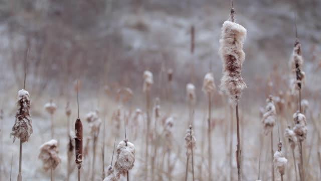 冬の間のキャットテール - 霜点の映像素材/bロール
