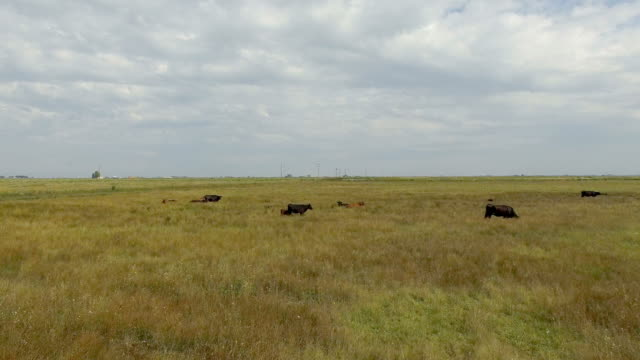 cattle and horses resting in lonely field - ранчо стоковые видео и кадры b-roll