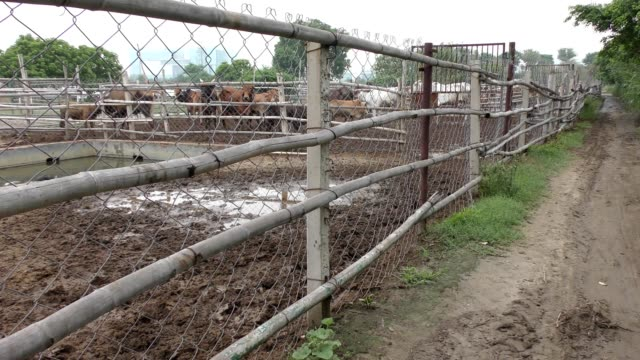 Cattle farm and its fences with bamboo and green plants
