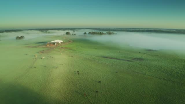 cattle farm covered in morning mist - drone shot - alabama filmów i materiałów b-roll