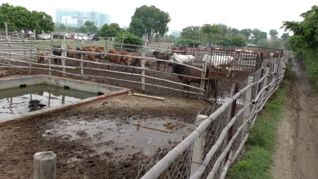 Cattle farm with different varieties and other animals