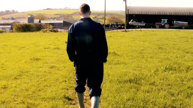 cattle farmer walking towards barn - dairy stock videos and b-roll footage