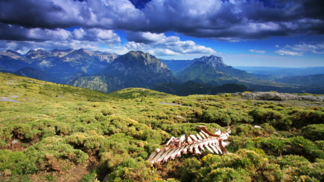 TIME LAPSE: Cattle Skeleton video