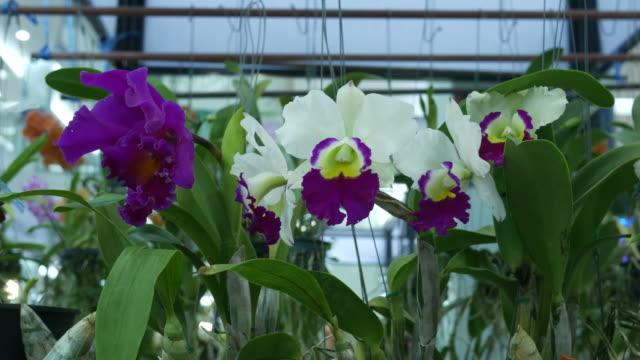Cattleya orchid on tree video