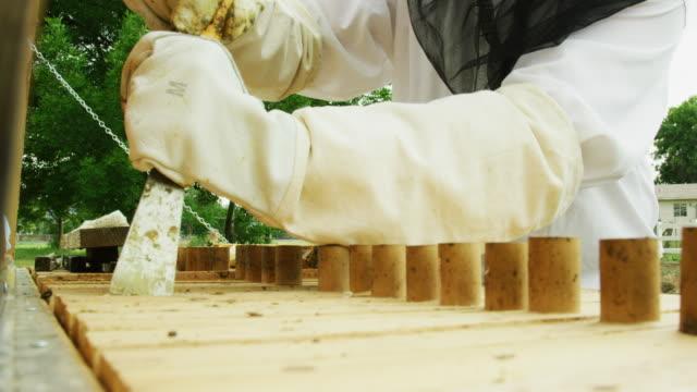 un apicoltore caucasico sulla trentina che indossa un cappello da apicoltura, un velo e guanti usa uno strumento per rimuovere una cornice da un alveare all'aperto - apicoltura video stock e b–roll