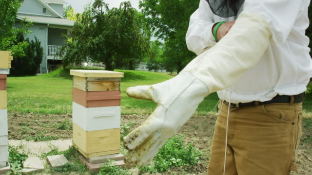 A Caucasian Beekeeper in His Thirties Wearing a Beekeeping Hat and Veil Puts on Gloves Next to Beehives and a House Outdoors