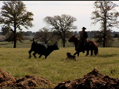 Caucasian Cowboy Rides Brown Horse on Texas Ranch video
