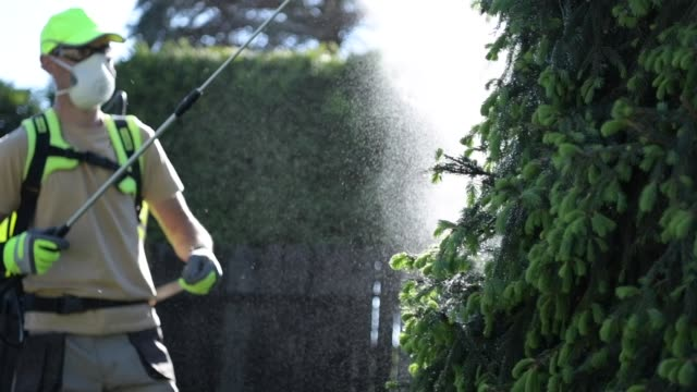 giardiniere caucasico con attrezzatura di spruzzatura insetticida professionale. insetticida per piante da giardino. - fertilizzante video stock e b–roll