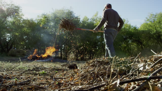 a caucasian man in his forties picks up wooden sticks and branches with a pitchfork and throws them on to a large flaming burn pile outdoors - patyk część rośliny filmów i materiałów b-roll