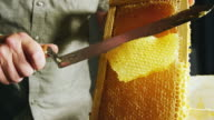 istock A Caucasian Man Uses a Knife to Slice through Honeycomb and Scrape the Wax into a Nearby Bucket While Honey Drips down the Wooden Frame 1168055378