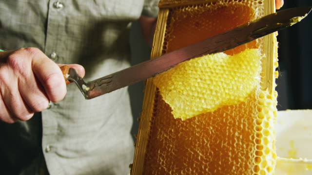 A Caucasian Man Uses a Knife to Slice through Honeycomb and Scrape the Wax into a Nearby Bucket While Honey Drips down the Wooden Frame