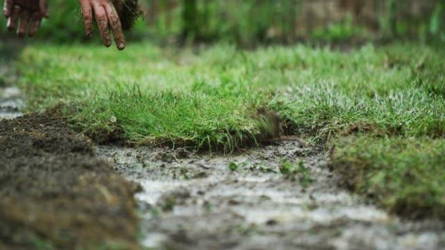 ein kaukasischer mann, der die freizeitkleidung trägt, flips einen platz der sod auf einen muddy bit of ground und dann pushes and pats it into place in a idential backyard (laying sod) - gärtnerisch gestaltet stock-videos und b-roll-filmmaterial