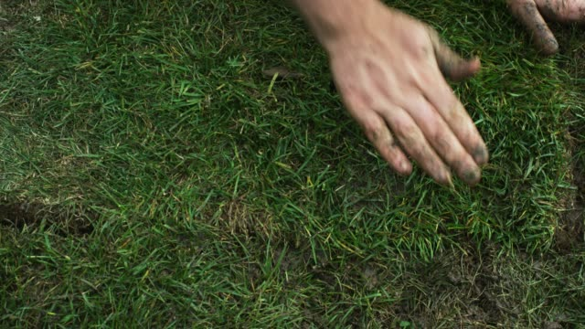 A Caucasian Man's Hands Flip a Square of Sod on to a Muddy Bit of Ground and Then Push and Pat It into Place in a Residential Backyard (Laying Sod)