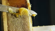 istock A Caucasian Person Uses a Knife to Slice through Honeycomb and Scrape the Wax into a Nearby Bucket While Honey Drips down the Wooden Frame 1168055266