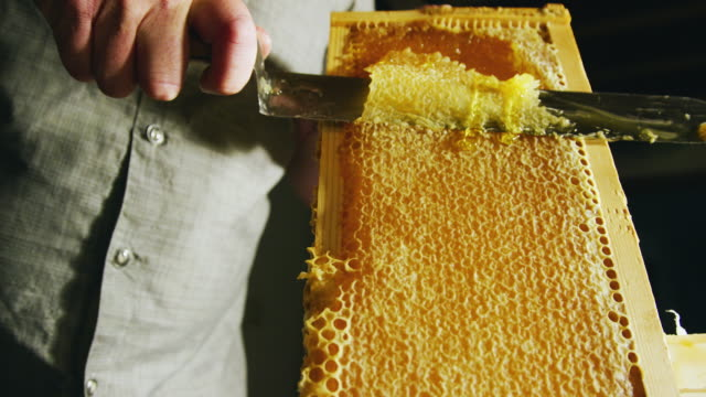vídeos de stock e filmes b-roll de a caucasian person uses a knife to slice through honeycomb and scrape the wax into a nearby bucket while honey drips down the wooden frame - honeycomb