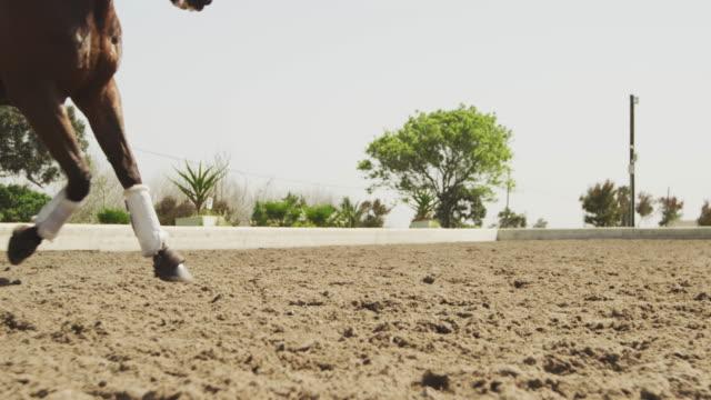 vidéos et rushes de femme caucasienne chevauchant son cheval - dressage équestre