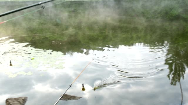 Caught Fish On A Hook video