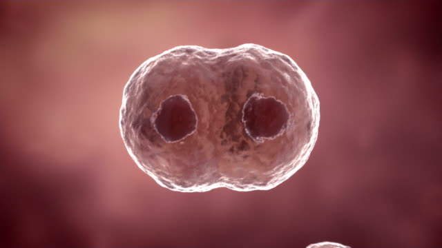 Cell dividing animation.HD