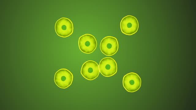 cell division - zelle stock-videos und b-roll-filmmaterial