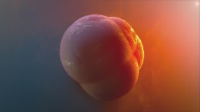 Zellproliferation, Abteilung. 3D Animation. – Video