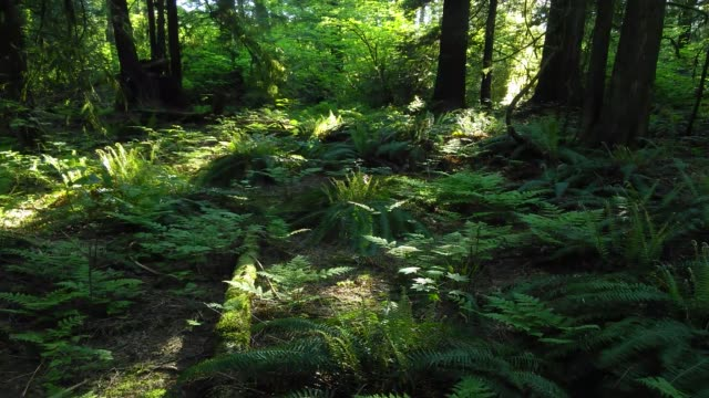 a cellphone time-lapse of an afternoon in a forest in vancouver, canada - muschio flora video stock e b–roll