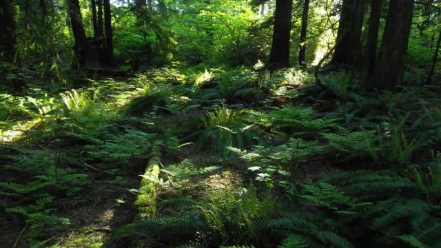 en mobiltelefon som time-lapse av en eftermiddag i en skog i vancouver, kanada - torv bildbanksvideor och videomaterial från bakom kulisserna
