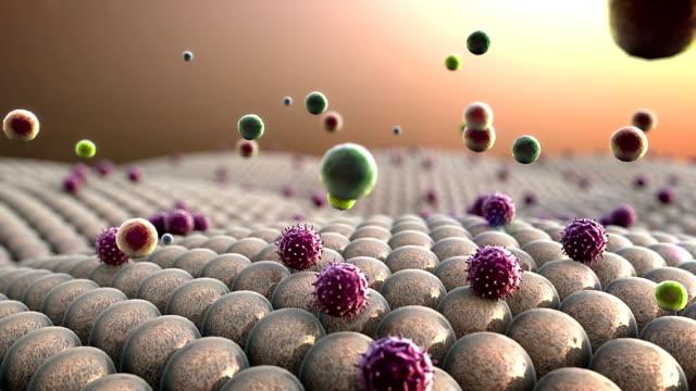 cells, leukocyte and viruses video