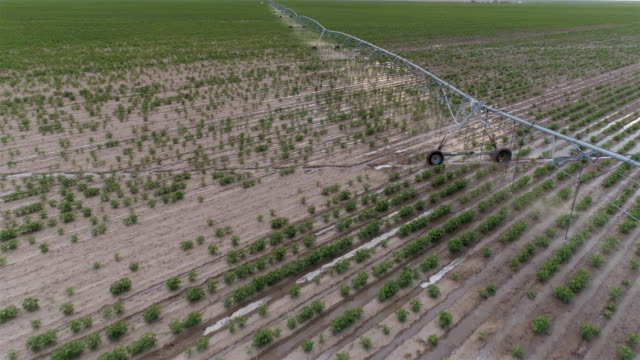 Center pivot irrigation system Center pivot irrigation concepts water wastage stock videos & royalty-free footage
