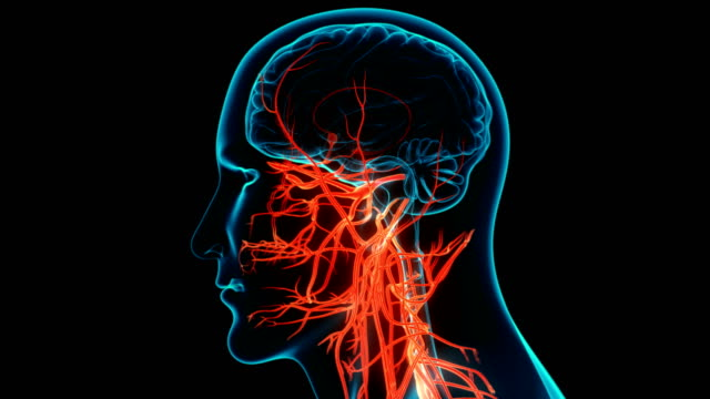 Central Organ of Human Nervous System Brain Anatomy Animation Concept