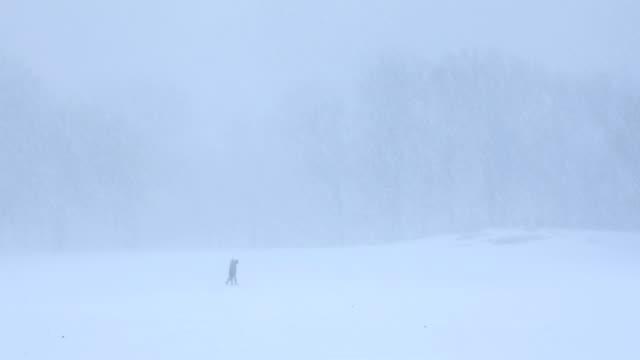 Central Park Blizzard video