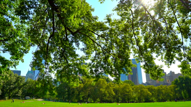 Central Park New York Cityscape central park manhattan stock videos & royalty-free footage