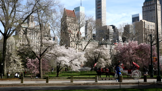 central park springtime crowds - cocchio video stock e b–roll