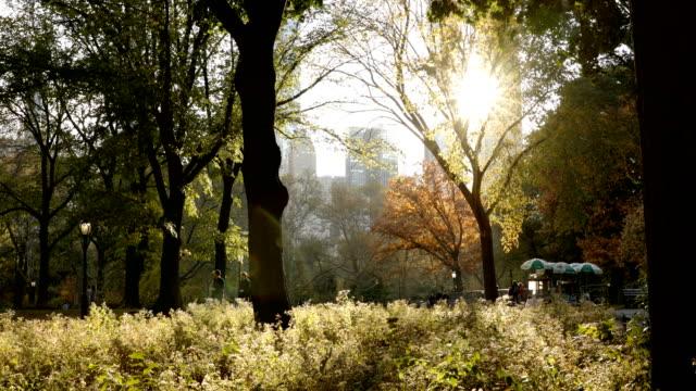 central park sunlit herbst - saftig stock-videos und b-roll-filmmaterial