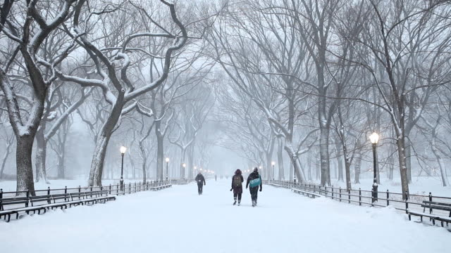 Central Park Winter Snowfall in New York City Night falling onto Central Park during a winter snow storm in New York City. central park manhattan stock videos & royalty-free footage
