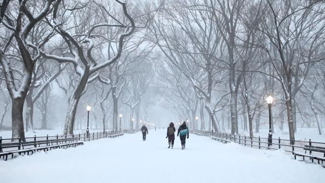 vídeos de stock e filmes b-roll de central park inverno noite - inverno