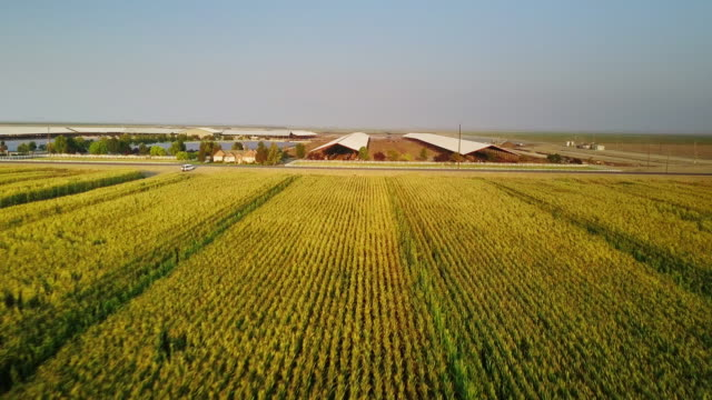 Central Valley Farmland - Aerial Shot video
