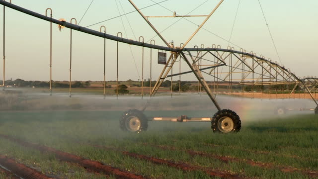 Centre pivot irrigation system irrigating vegetables,South Africa video