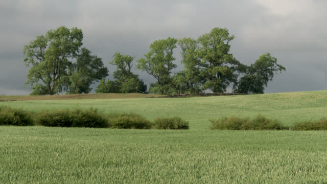 Cereal crop field in south west Scotland Crop field footage shot at 50fps and interpreted at 25fps to give slow motion galloway scotland stock videos & royalty-free footage