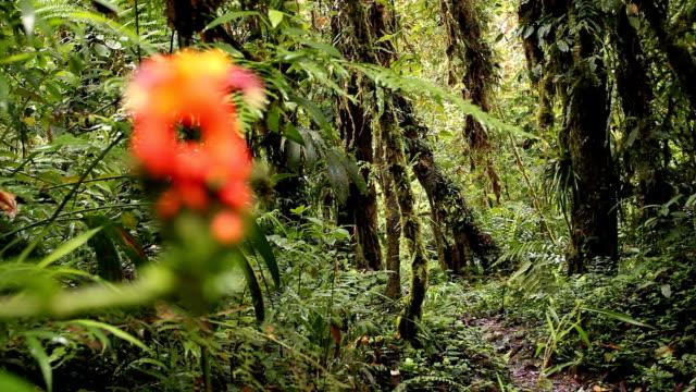 vídeos y material grabado en eventos de stock de cetrropogon flor con cloudforest fondo, extracción de enfoque - musgo flora