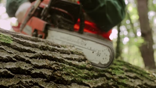chainsaw cuts wood. - motosega video stock e b–roll
