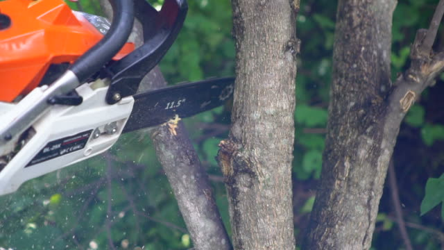 chainsaw cutting into a tree : slow motion - fronda video stock e b–roll