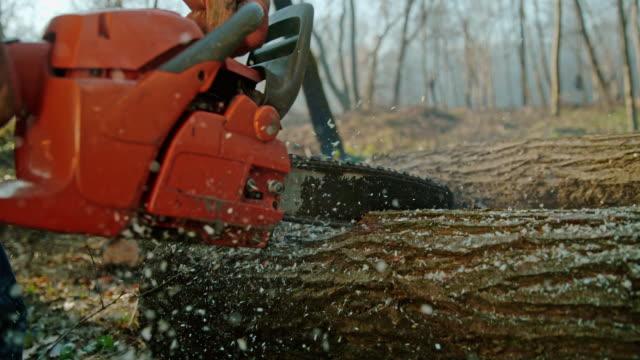 slo mo chainsaw cutting into a tree trunk - motosega video stock e b–roll