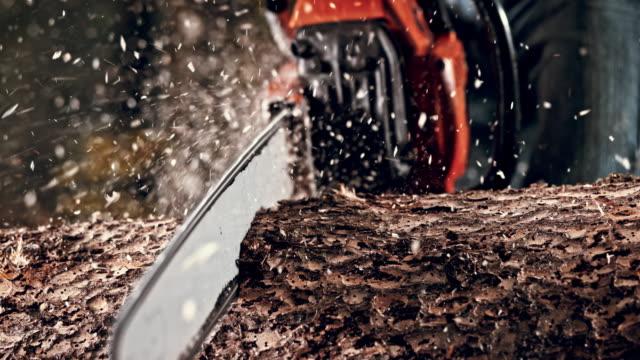 slo mo ds chainsaw cutting into a tree trunk - motosega video stock e b–roll