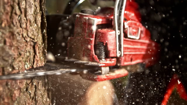 SLO MO DS Chainsaw cutting into a tree video