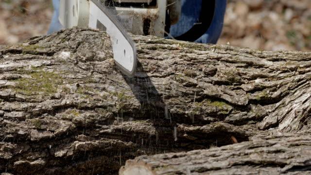 chainsaw cutting through log close up - motosega video stock e b–roll