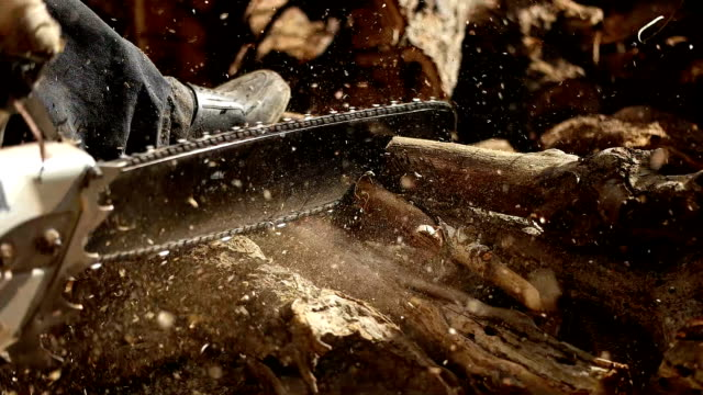 eylem kesme ahşap testere. adam kesme ahşap testere, toz ve hareketleri ile. - şömine odunu stok videoları ve detay görüntü çekimi