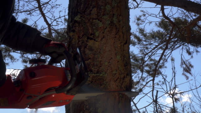 chainsaw , lumberjack - albero caduto video stock e b–roll